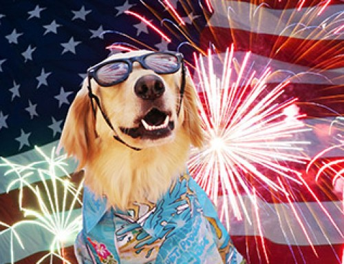 4th July Pet Tips