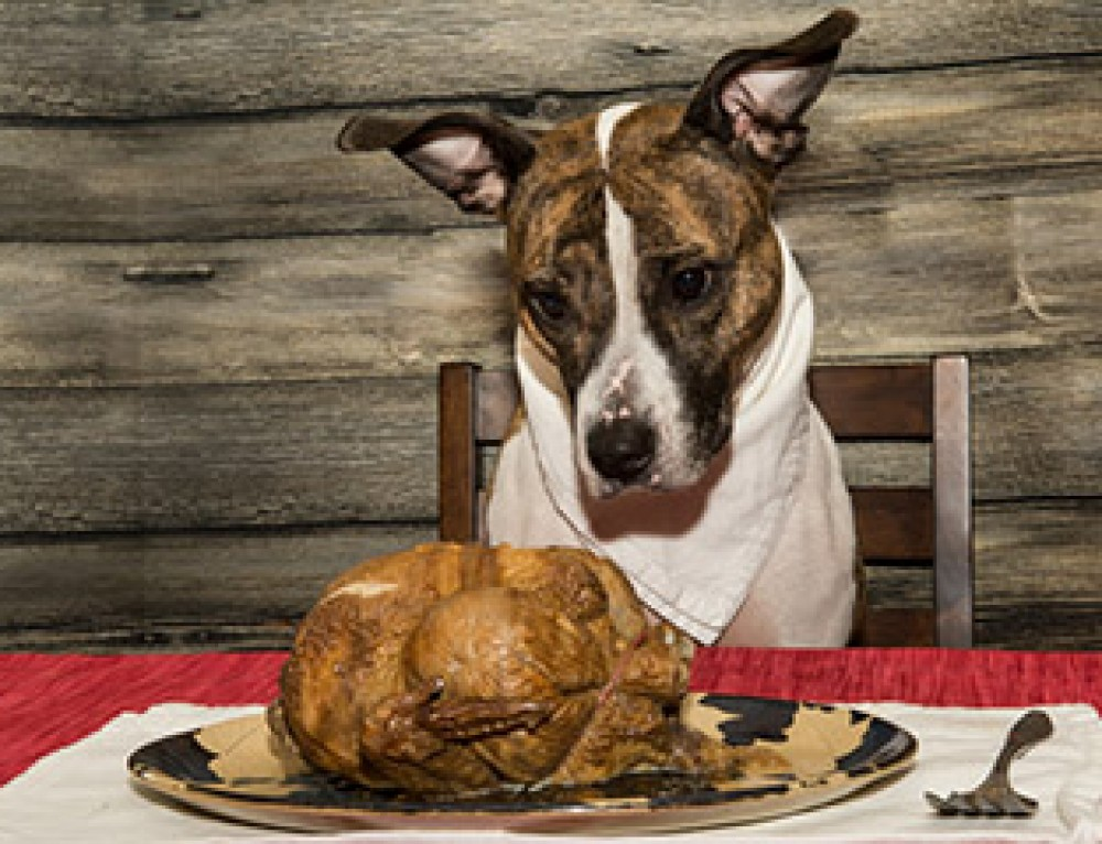 Thanksgiving Pet Safety