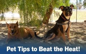 Beat_the_heat