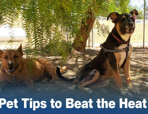 Keep Dogs and Cats Cool