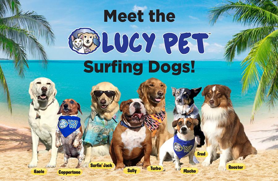 Furry Friends Animal Shelter Surf Dog