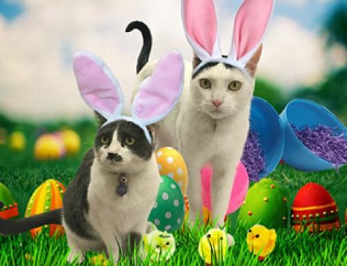 Easter Hazards