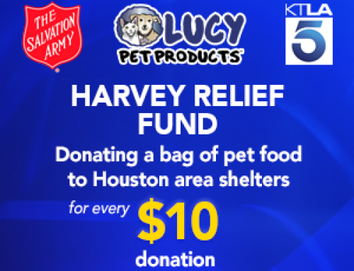 Helping Pets and People Impacted by Hurricane Harvey