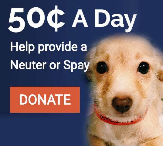 452 lucy pet foundation