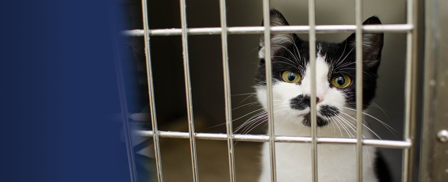 The Lucy Pet Foundation- Free Spay and Neuter Mobile Clinic