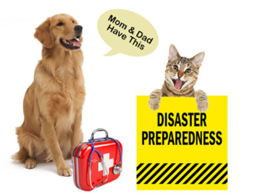 Disaster Preparedness and Your Pet