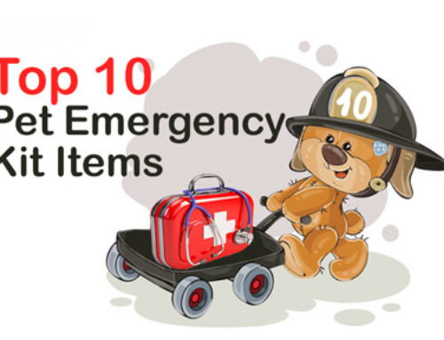 Top 10 Pet Emergency Kit Items